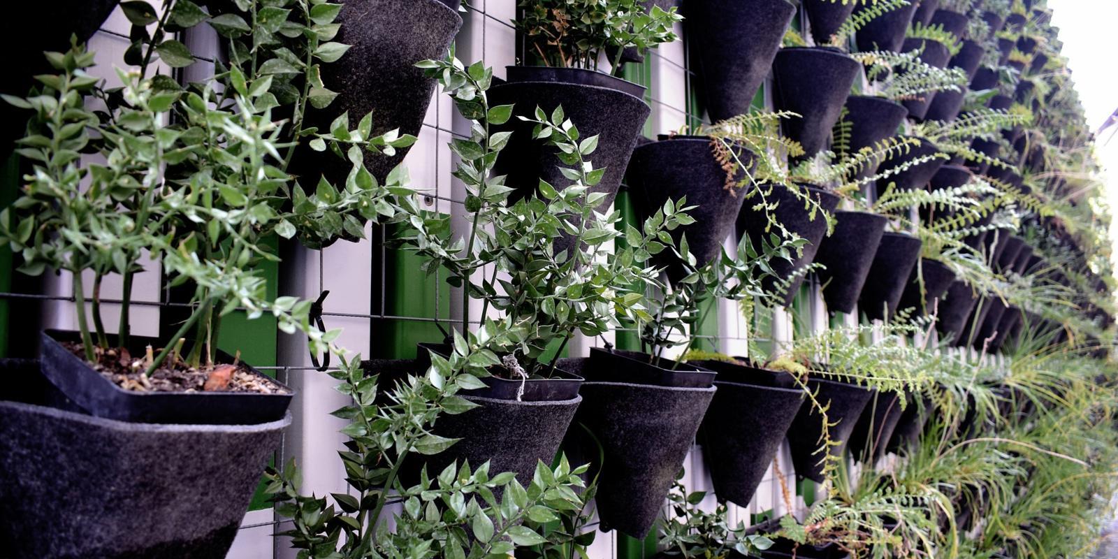 Herhaling in plantenbakken