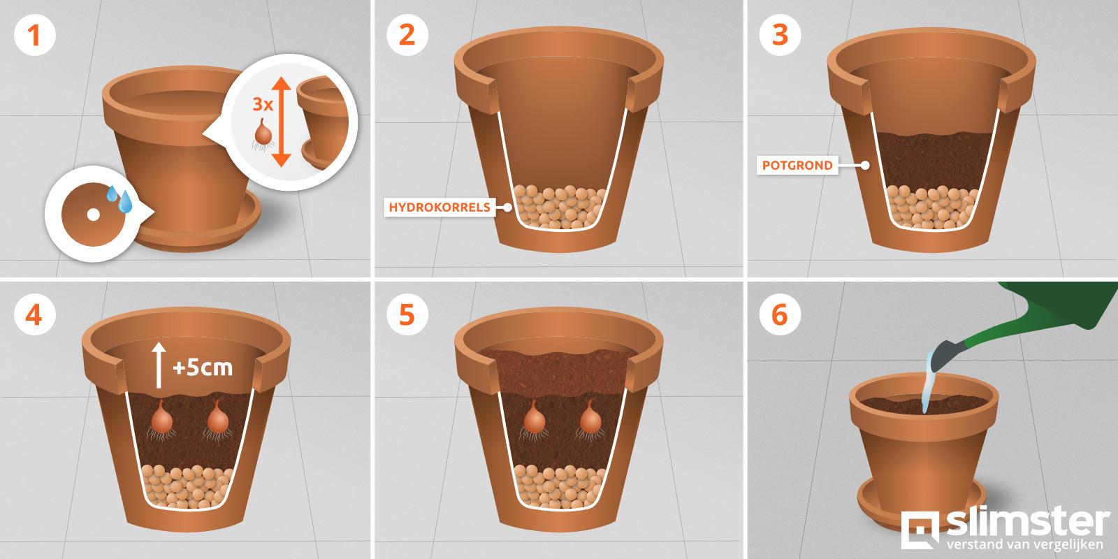 Stappenplan bloembollen planten in potten en bloembakken