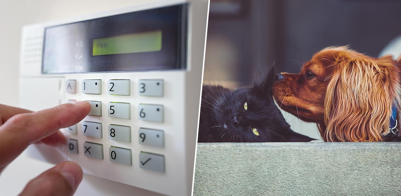 Alarm met huisdieren: wat zijn de mogelijkheden?