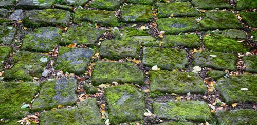 Mos tussen stenen verwijderen