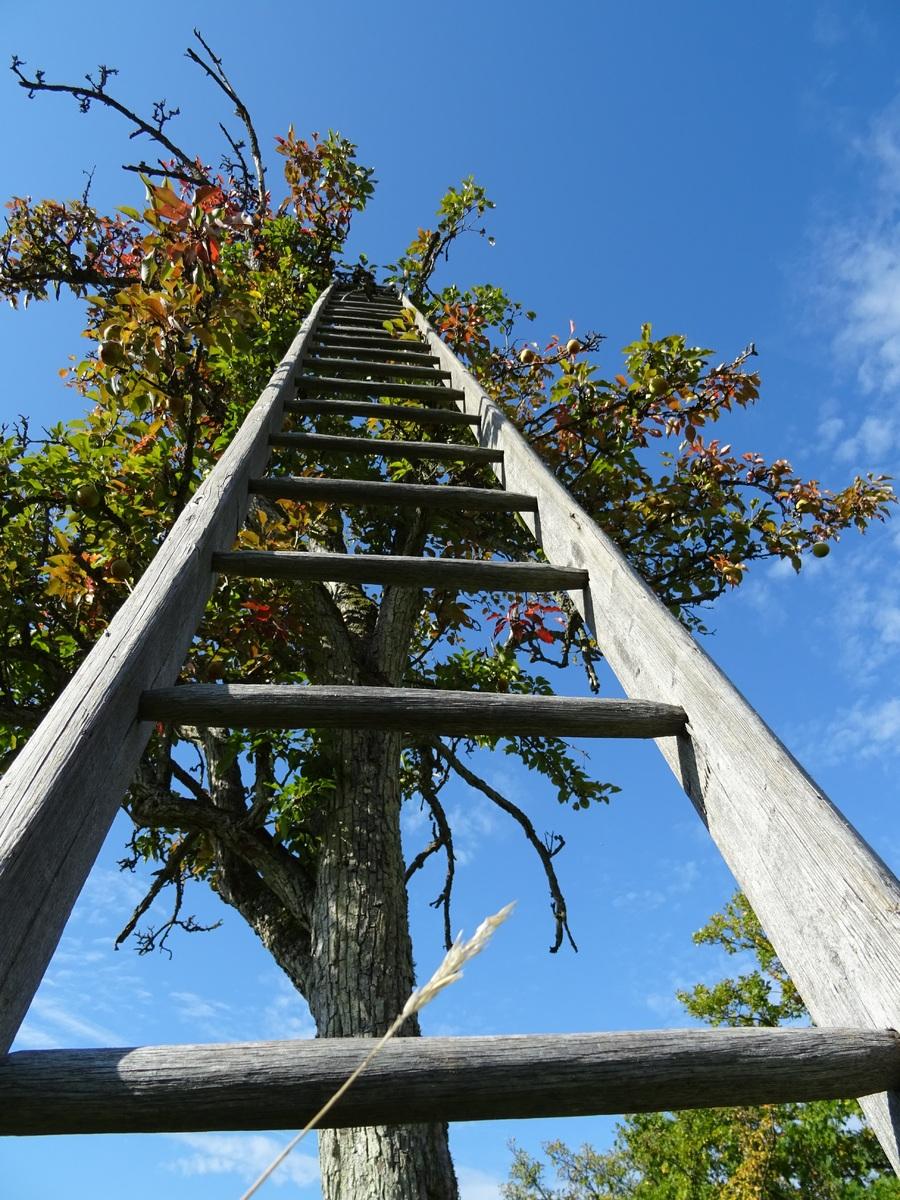 Appelboom snoeien met ladder