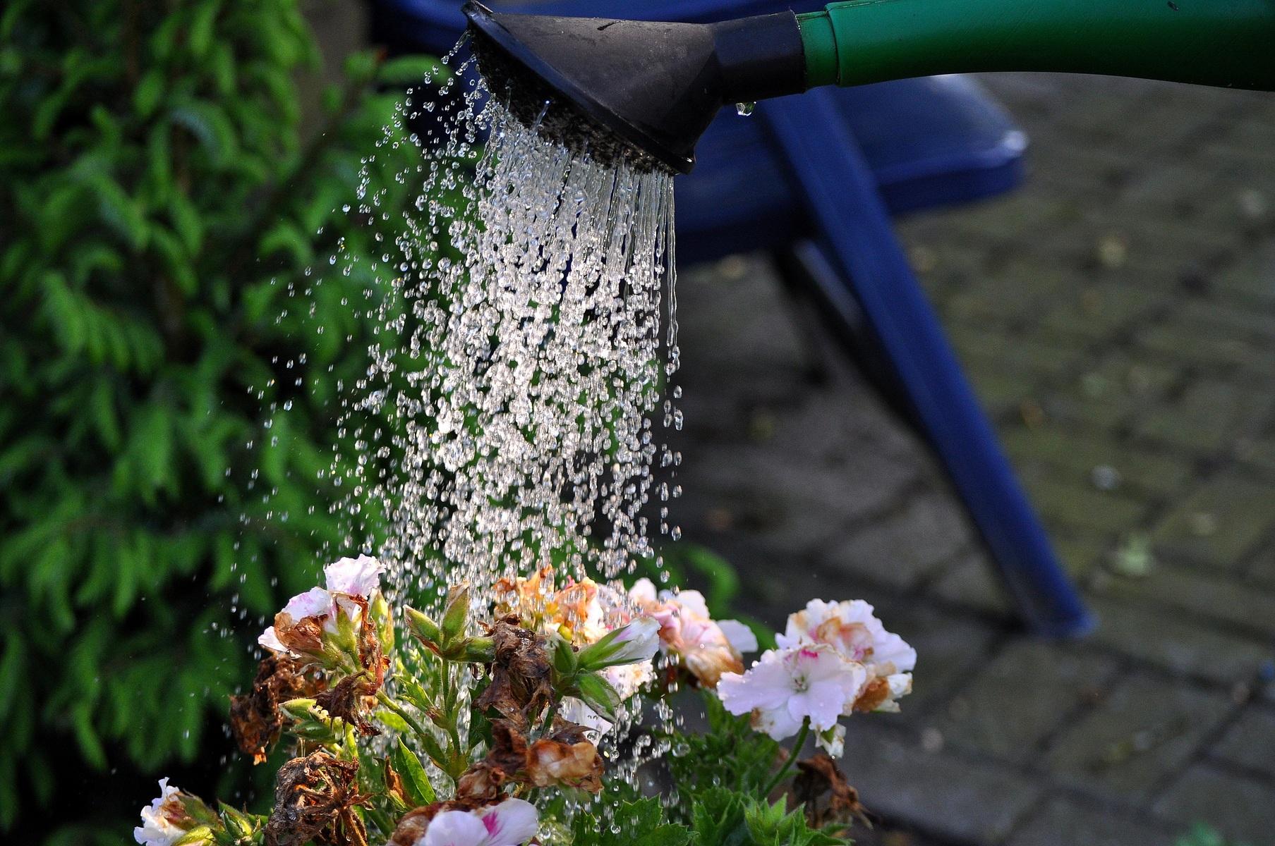 Watergeven planten in bloembakken