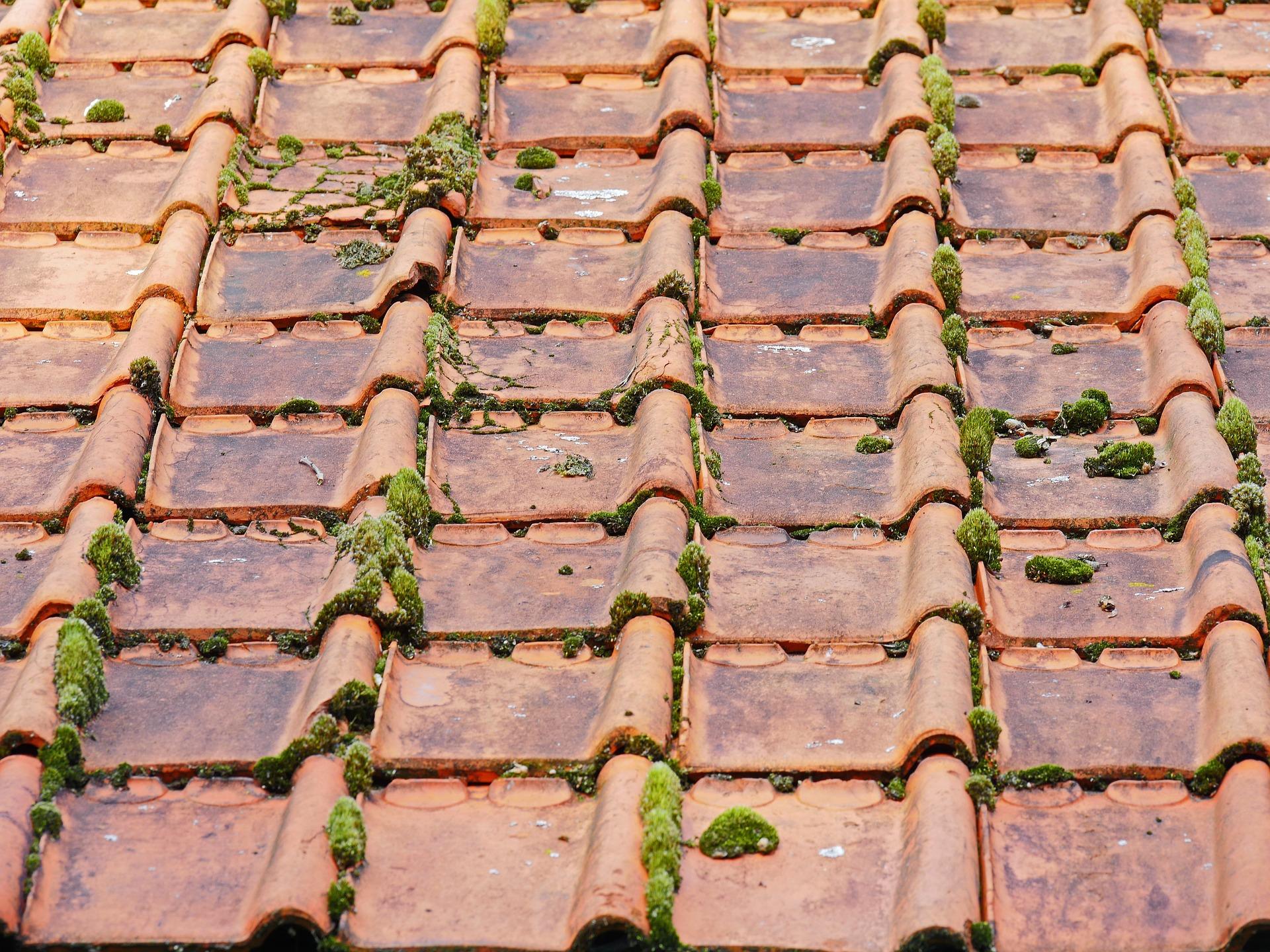 Mos van dak verwijderen