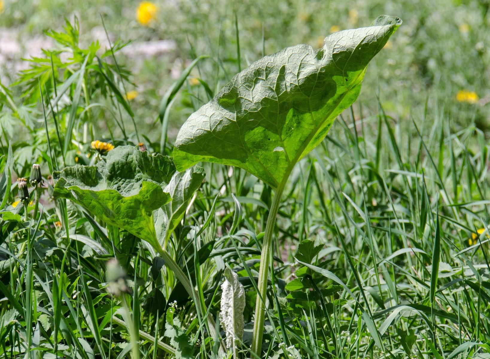 Onkruid uit gras verwijderen